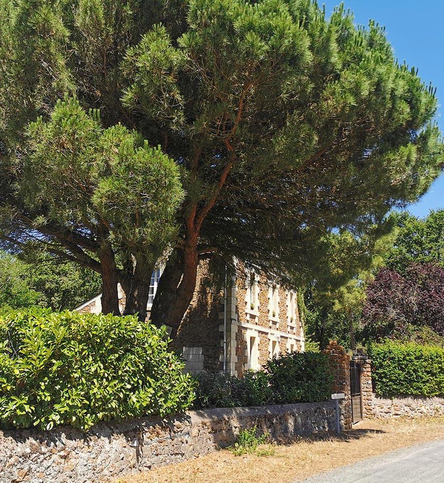 Sous le pin - Chambres d'hôtes Anjou Val de Loire - Quatre chats sous un pin